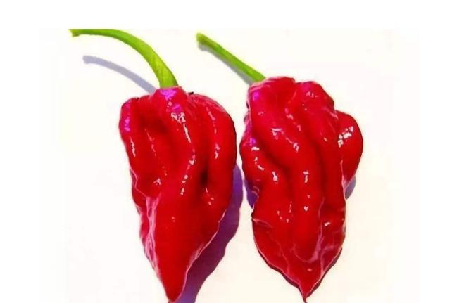 世界最辣的辣椒排名前十大 印度鬼椒仅排第八,第一创造吉尼斯