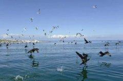 中国最大的湖泊排名,青海湖稳居首位