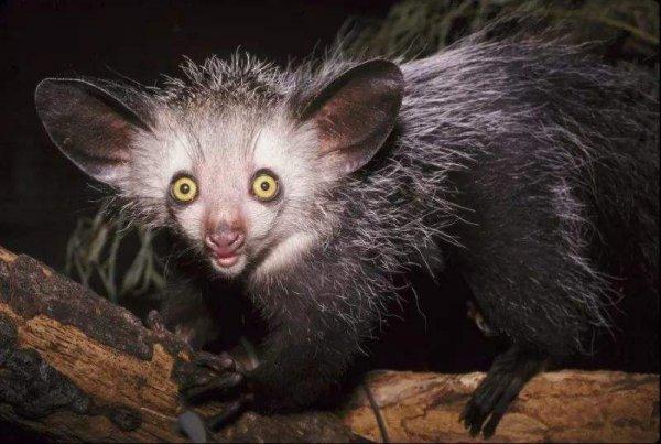 极危物种_极危物种和濒危物种_极危物种和濒危物种区别