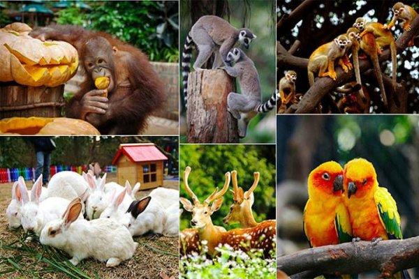 中国十大野生动物公园排名,广州长隆排第一