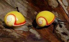 世界十大雌雄同体的生物,你知道几种?