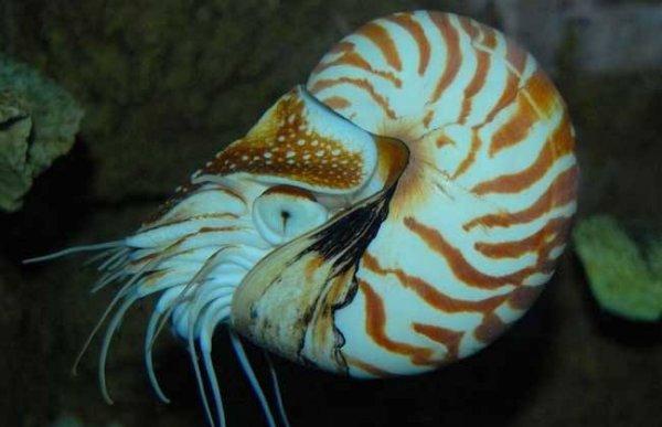世界上最漂亮的十种贝类,你觉得哪种好看?