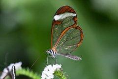 世界上第一漂亮的蝴蝶排名前十