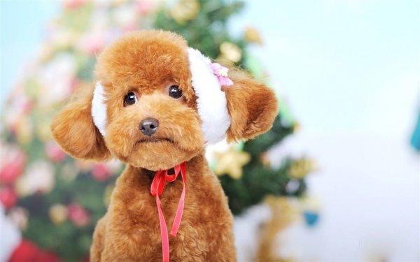 宠物狗都有哪些品种?最受欢迎的十大宠物狗