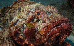 世界最毒的鱼有哪些?世界上十大最毒的鱼排名