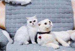 你喜欢哪只网红猫?盘点抖音十大网红猫
