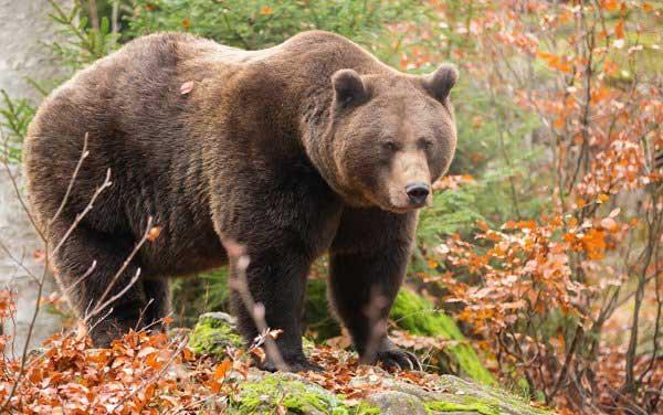 世界上嗅觉最灵敏的动物排行榜,熊排第一位