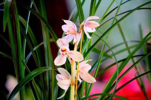 世界上最高贵的十种花,冠军被兰花夺得