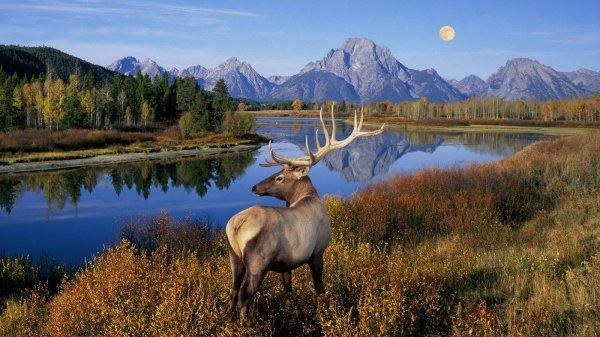 世界上最大的国家公园,黄石公园像幅美丽画卷