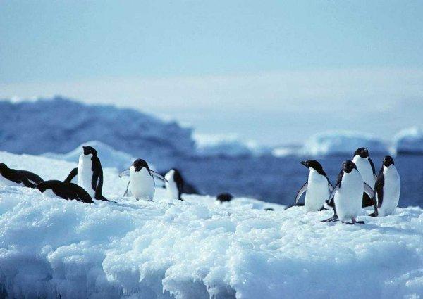 世界上风最大的地方是哪里,南极常年8级大风