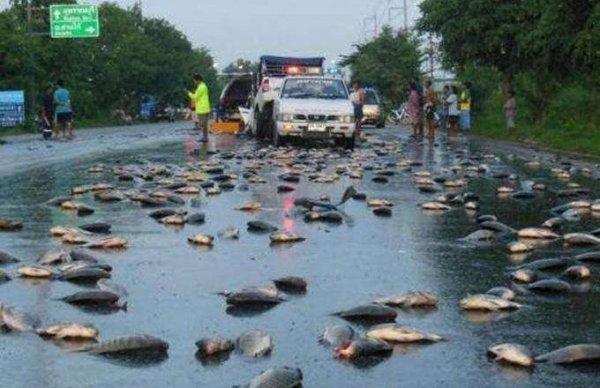 世界十大罕见的怪雨,鳄鱼竟从天而降!