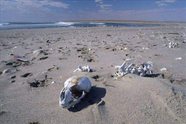 世界上最恐怖的沙滩,纳米比亚骷髅海岸