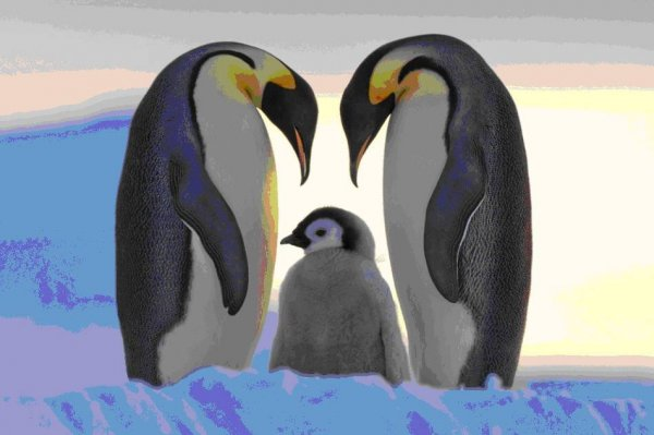 世界上最大的企鹅,帝企鹅身高可达1.2米