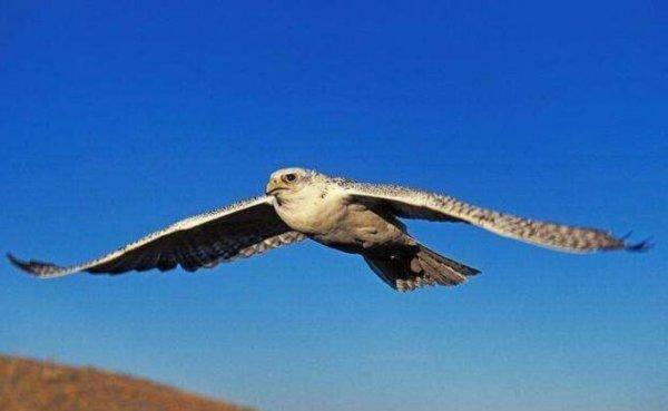世界十大最贵的观赏鸟,第一名是土豪的宠物鸟