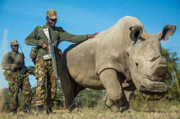 十大即将灭绝的珍稀动物,北部白犀牛仅剩一只