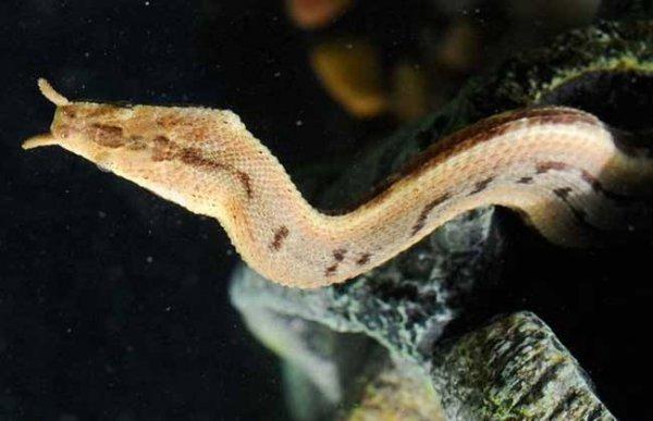 世界上捕鱼速度最快的蛇,捕鱼仅需0.001秒
