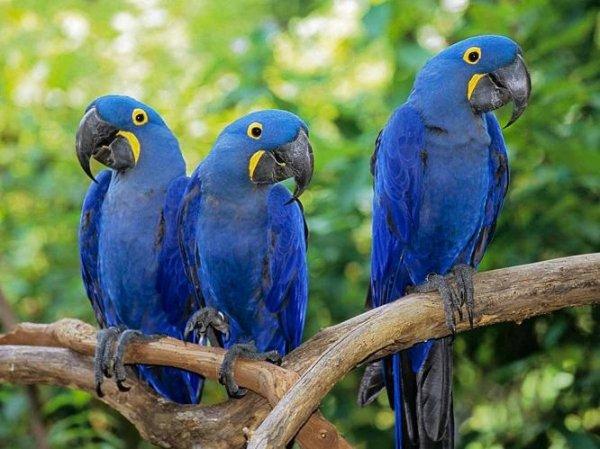 世界上颜值最高的十种鸟,你见过几种?