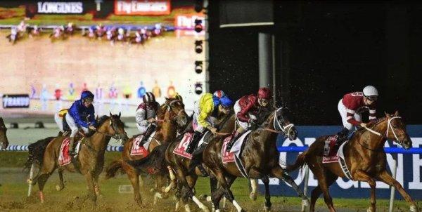 世界上最奢华的比赛 迪拜赛马奖金达2千多万美元