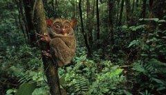 盘点地球上10大最怪异的动物,个个长相奇特