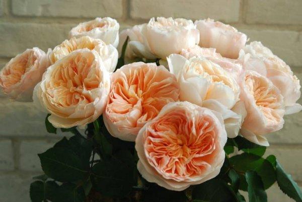 世界上最贵的玫瑰花,价值300万英镑