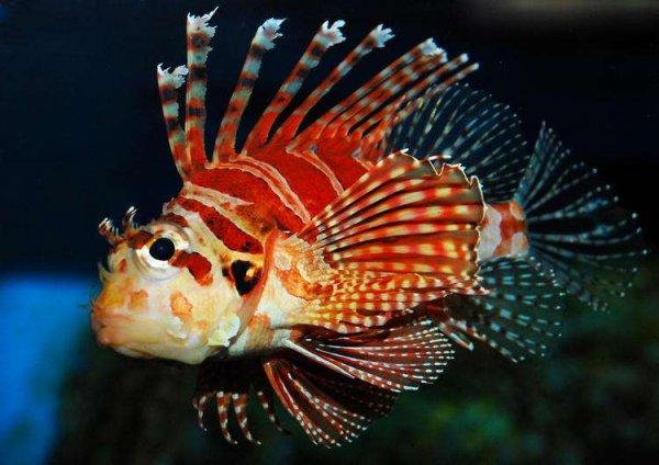 世界上最顽强的动物,狮子鱼竟在海底8178米