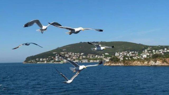 世界上最小的海是什么海?土耳其的马尔马拉海