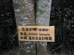 世界上最毒的树,箭毒木让人五步毙命