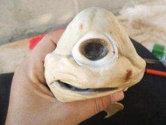 世界十大长相最奇怪的动物,独眼鲨鱼排第一