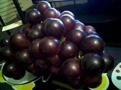 世界上最大的葡萄,跟乒乓球一样大