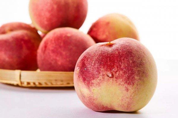 世界上最大的桃子,单颗桃子果重2.1斤