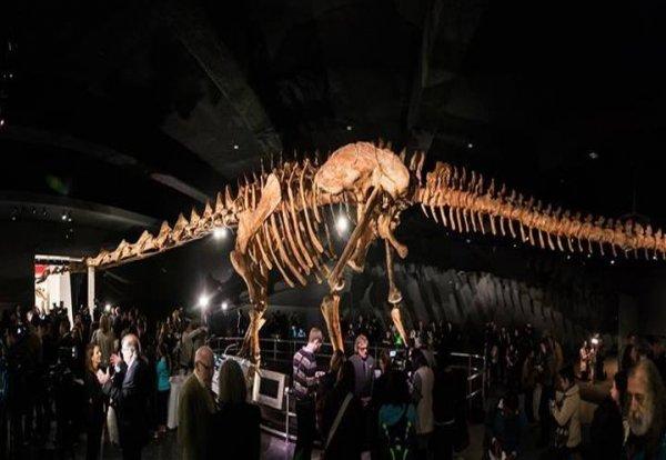 世界上最大的恐龙化石 泰坦巨龙长超40米重77吨