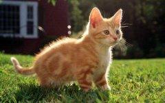 世界上最爱干净的2种动物,猫和浣熊上榜单