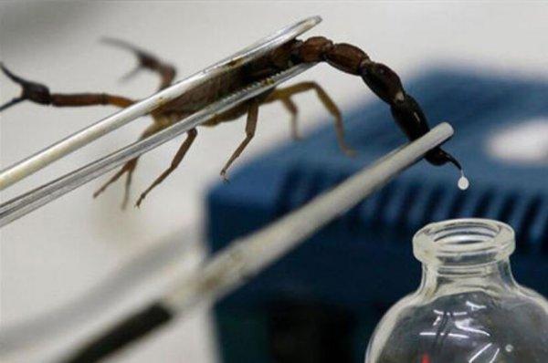 世界上最贵的7种液体 蝎毒每升6000万人民币