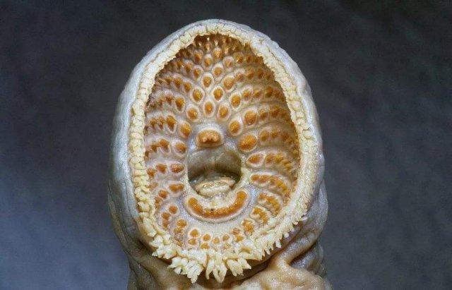 盘点十大牙齿最奇特的动物,你知道几种?