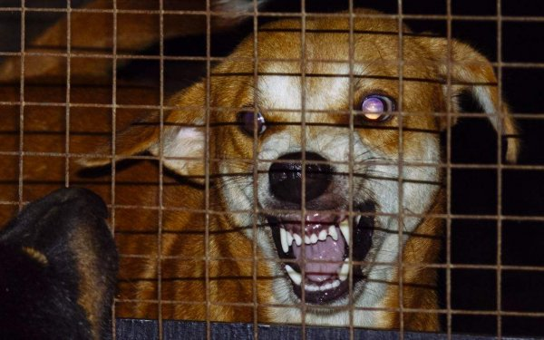 世界上十大必死病排行,狂犬病排名第一位