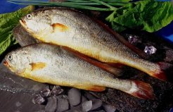 中国最贵的四种鱼,吃过一种就算是土豪了