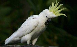 世界十大寿命最长鸟类排行榜,第一种能活80岁