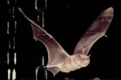 十大带病毒野生动物,蝙蝠携带大量病毒