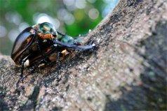 盘点十大濒临灭绝昆虫,你认识哪几种?