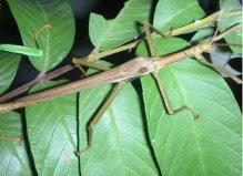 世界上最奇怪的10种昆虫,个个千奇百怪