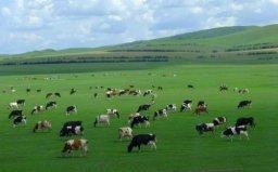 中国最大的草原,呼伦贝尔草原面积近1.5亿亩