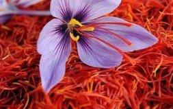 世界上最贵的花,藏红花是伊朗的国宝花