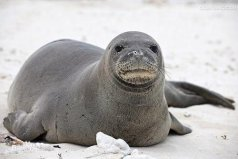 夏威夷岛上有什么动物?夏威夷10大代表动物