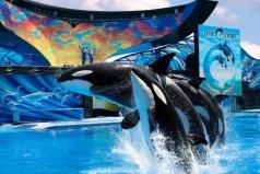 全球最著名的二十大海洋馆,中国有3个上榜