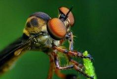 世界上眼睛最多的动物,蜻蜓有5.6万只眼睛