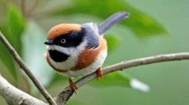 世界上最邪恶的四大动物,僵尸鸟专吃动物大脑