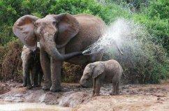 世界上最记仇的动物,大象记忆力非常强