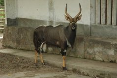 世界上胡须浓密的十种动物,薮羚排第一