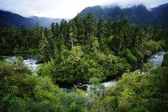 中国最大的原始森林 西藏原始森林达717万公顷