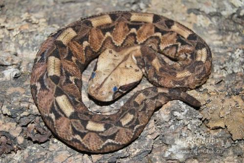 世界rpg九头蛇勋章合成图片